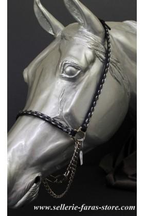 Arabian horses showhalter greymed